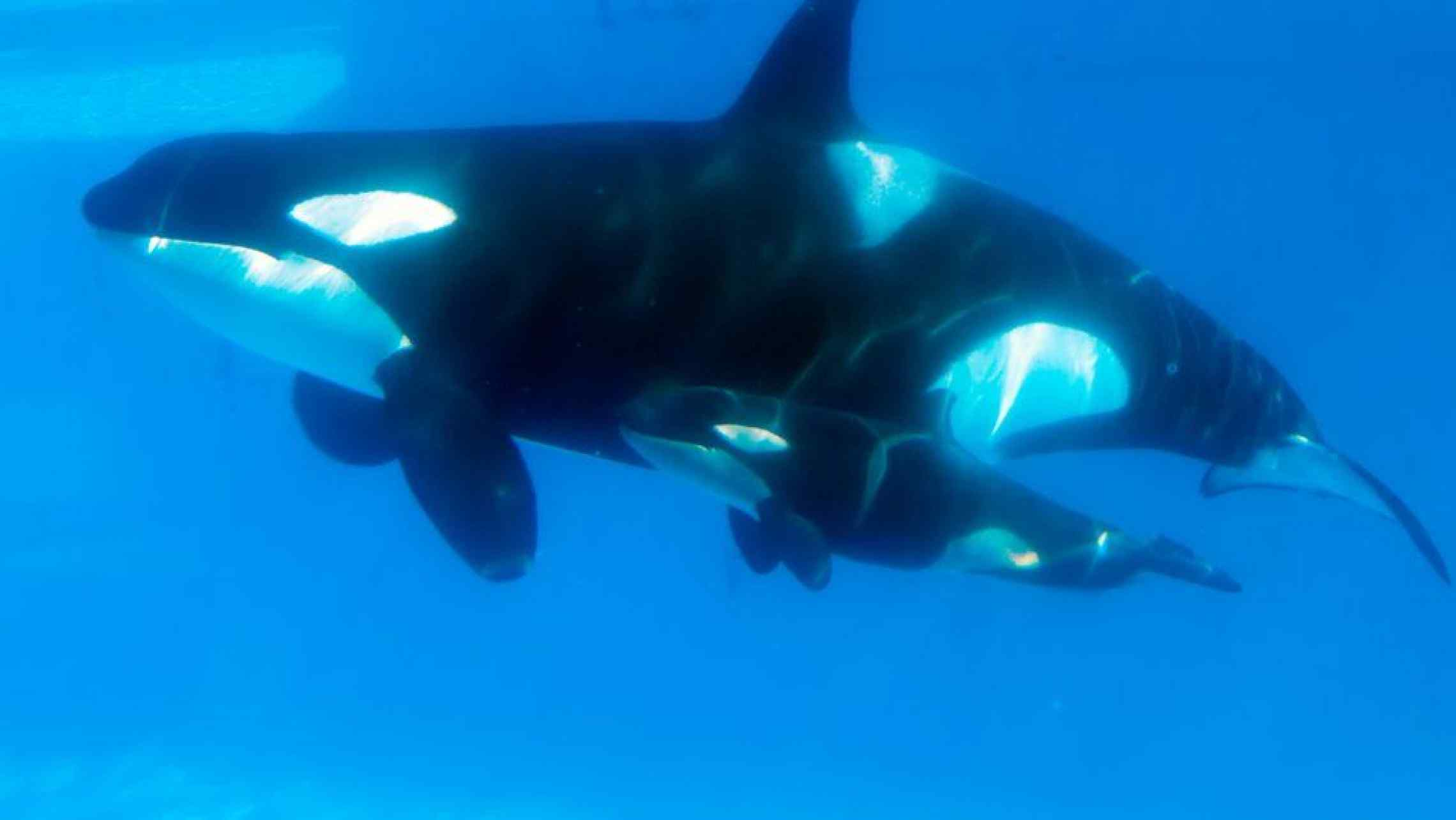 separation anxiety and issues of the mother orca kasatka in seaworld Blackfish response to seaworld seaworld a male killer whale and that takara was 12 when they took her away from her mother kasatka seaworld further.